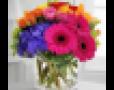Hoa chúc mừng   Lavender Flowers