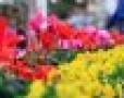 Kinh doanh shop hoa tươi   lĩnh vực hot nhưng nhiều chông gai!