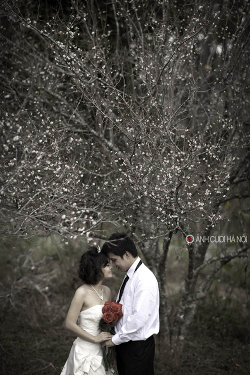 bo suu tap anh cuoi 8 Bộ sưu tập ảnh cưới đẹp và lãng mạn