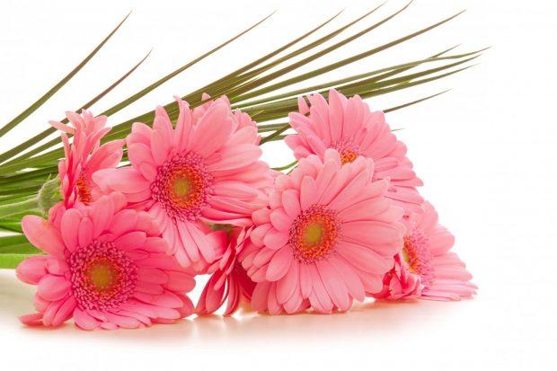Hoa dong tien dep 620x413 Bí quyết giúp các chủ shop hoa tươi online giữ hoa tươi lâu
