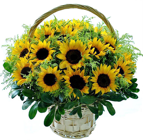 hoa tuoi tang sinh nhat 12 Mừng sinh nhật sếp tổng nên mua hoa gì