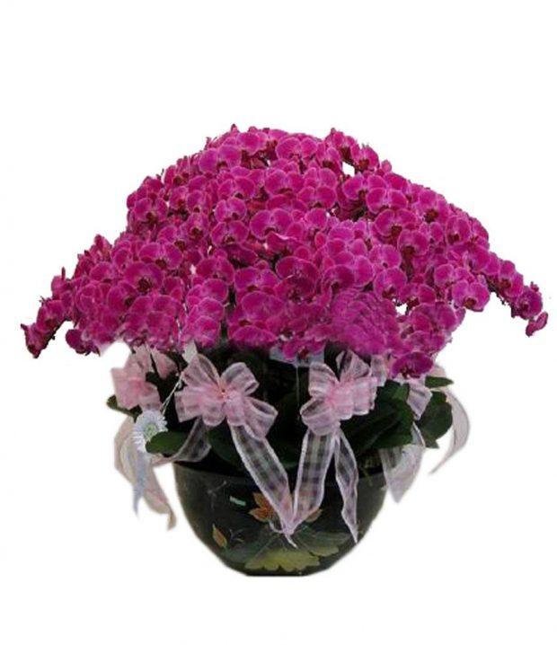 hoa tuoi tang sinh nhat 13 620x718 Mừng sinh nhật sếp tổng nên mua hoa gì