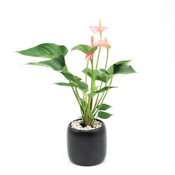 cay de ban danh cho nguoi mang hoa 6 Chọn cây trồng để bàn cho người mạng hỏa