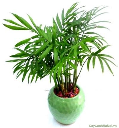 cay de ban hop nguoi mang tho 8 Chọn cây trồng để bàn cho người mạng thổ