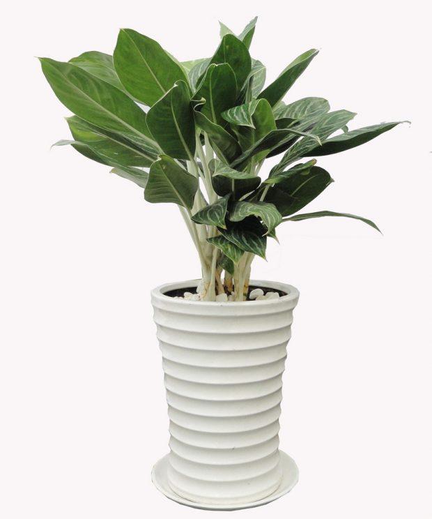 cay trong de ban cho nguoi mang hoa 2 620x744 Chọn cây trồng để bàn cho người mạng hỏa