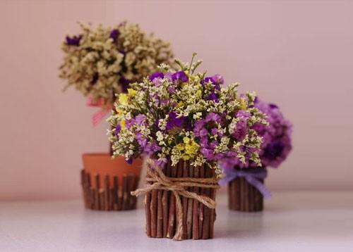 co nen tang hoa salem cho ban fai 3 Có nên tặng bạn gái hoa Salem