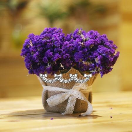 co nen tang hoa salem cho ban gai 2 Có nên tặng bạn gái hoa Salem