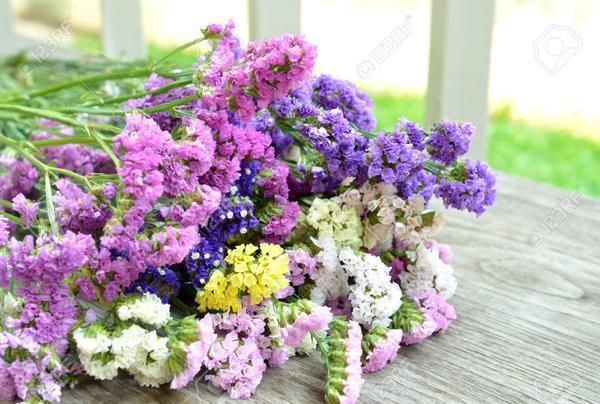 co nen tang hoa salem cho ban gai 4 Có nên tặng bạn gái hoa Salem