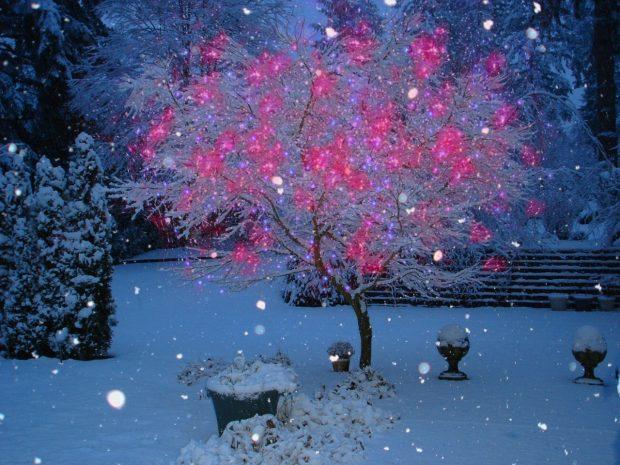 chup anh tuyet dep 2 620x465 Mẹo hay giúp bạn chụp ảnh tuyết rơi đẹp