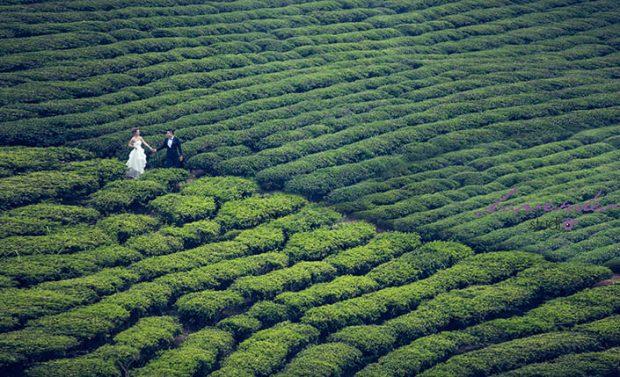 dia diem chup anh cuoi da lat 2019 620x377 3 địa điểm chụp ảnh cưới Đà Lạt 2019   tuy cũ nhưng chưa bao giờ hết hot